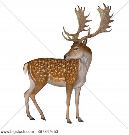 Fallow Deer Buck 3d Illustration - The Fallow Deer Can Be Traced Back To Pleistocene Period And The
