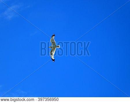 White Seagull Flying In The Blue Sky