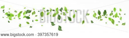 Grassy Foliage Tree Vector White Background Pattern. Motion Leaf Template. Mint Greenery Swirl Poste