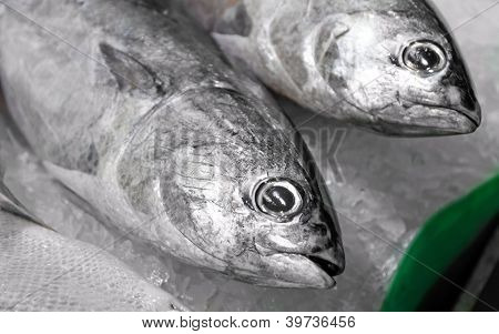 Tunny & Tuna