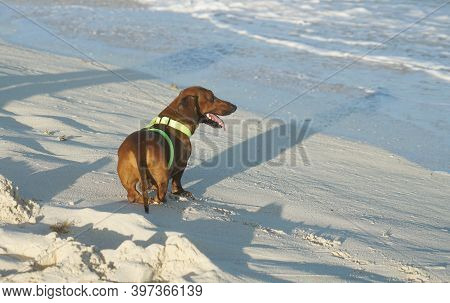 The Dog Enjoy Playing In The Beach
