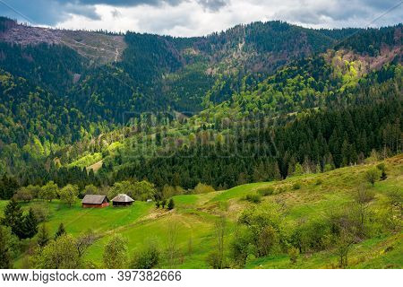 Mountain Rural Landscape In Spring. Forest And Orchard On The Steep Hills. Scenery Of Abandoned Kuzs