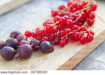 Red Currants And Purple Gooseberries Are On The Table. Ripe Berries In Summer. Beautiful Berries On