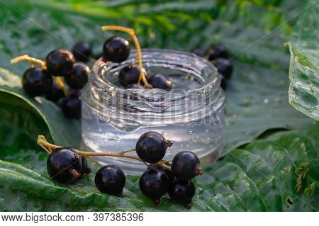 Black Currant Berries With Transparent Cream Gel On A Large Green Leaf Hosts. Juicy Cream With Vitam