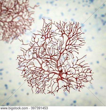 Purkinje Neuron, Gabaergic Neuron Located In The Cerebellum, 3d Illustration