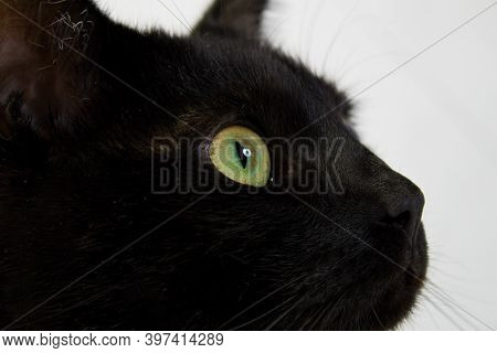 Detail Of A Black Cat With Green Eyes.close Up Of A Black Cat`s Face With Green Eyes.
