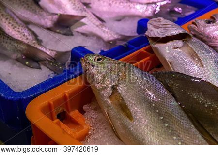 Seafood On Ice At The Fish Market, France