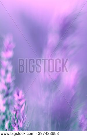 Blurred Gradient Pink And Lilac Background. Blurred Floral Background. Background. The Concept Of Na