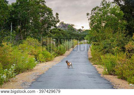 Cam Lap Promontory Cam Ranh
