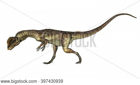 Dilophosaurus Dinosaur Walking Head Down Isolated In White Background - 3d Render