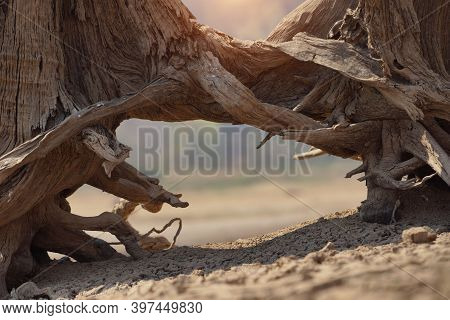 Cracked Earth From Arid Drought Weather In Dam Or River, Hot Summer Nature, Dead Stump Tree On Hill