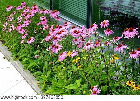 Pink Prairie Garden Perennial Flowerbed With A Different Set Of Flowers Of A Flowerbed Of A Larger P