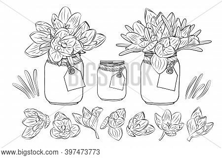 Hand Drawn Crocus Flowers In Mason Jar Clipart Monochrome Set. Floral Design Element. Isolated On Wh