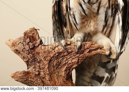 Beautiful Eagle Owl On Tree Against Beige Background, Closeup. Predatory Bird