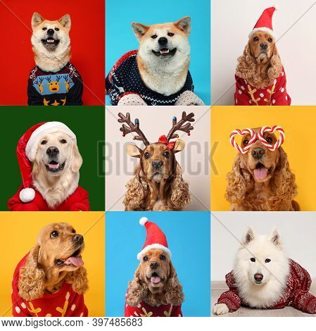 Cute Dogs In Christmas Sweaters, Santa Hats, Headband And Party Glasses On Color Backgrounds