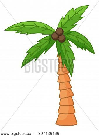 Palm Tree Isolated At White, Cartoon Style, Exotic Tree With Coconuts, Green Leaves, Natural And Sub