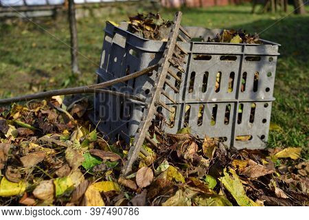 Wooden Rake And Plastic Box For Storing Leaves In Autumn