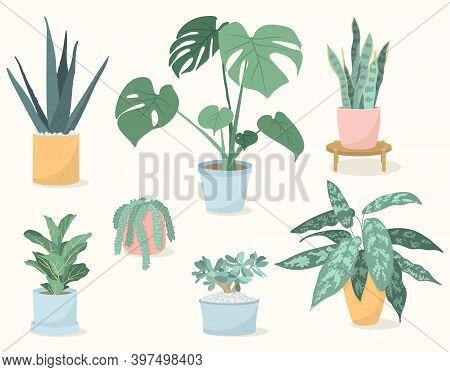 Vector Illustration Set Of Trendy House Plants In Pots: Aloe Vera, Fiddle Leaf Fig, Snake Plant, Mon