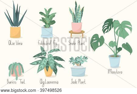 Vector Illustration Set Of Trendy House Plants In Pots With Inscriptions: Aloe Vera, Fiddle Leaf Fig