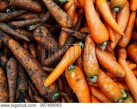Carrots. Half Of The Carrots Are Pure, Half Carrots Are Groa. Food. Vegetables. Textured Background