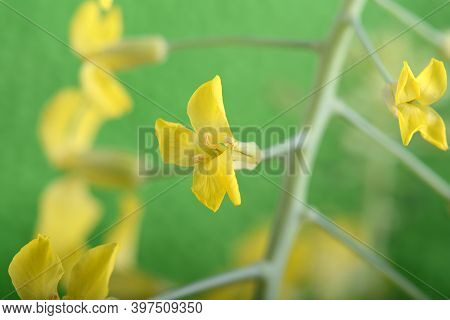 Art Wild Spring Flowers Close Up. Yellow Flower On Green Background