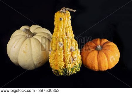 Still Life Of Colorful Gourd And Pumpkins Isolated Against Black