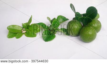 Kaffir Lime Or Citrus Hystrix When It Is Still Flowering, Still Small, And When It Is Big And Ripe