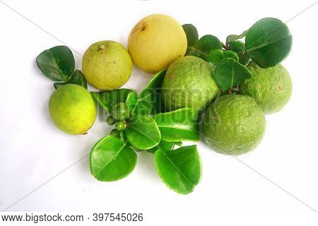 Kaffir Lime Or Citrus Hystrix And Key Lime Or Citrus Hybrid. There Are Leaves. Focus Selected, White