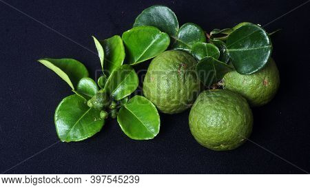 Kaffir Lime Or Citrus Hystrix Small And Large Sizes. There Are Leaves. Focus Selected, Black Backgro