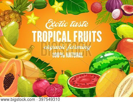 Tropical Fruits Vector Pineapple, Mango And Banana, Pomegranate And Pear. Watermelon, Guava, Figs An
