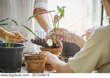 Two Asian Women Transplanted Plants Into Pot Of Coconut Fibers. Hobbies And Leisure, Home Gardening,