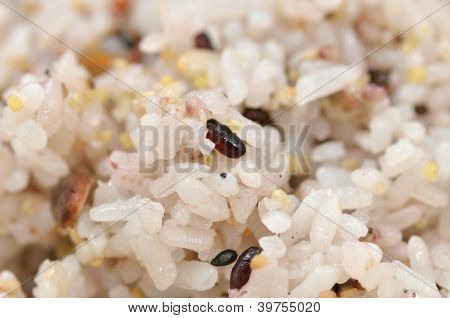 The Close-up Of Mixed Rice.