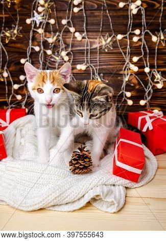Portrait Of Beloved Pets With White Blanket, Bokeh Effect Lights. Pretty Two Cats Sitting At Home In