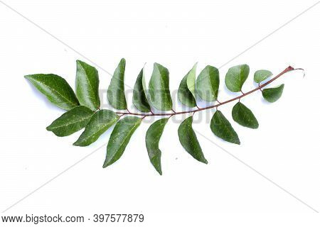 Fresh Curry Leaves Isolated On White Background, Top View, Curry Leaves, Murraya Koenigii On White B