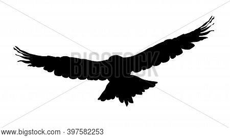 Hawk, Eagle, Falcon Or Orel Black Silhouette Isolated On White Background. A Large Predator Soar In