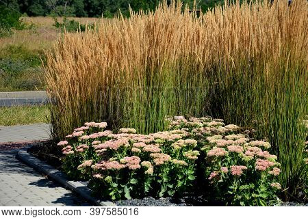 Perennial Beds Mulched With Dark Stone Gravel With A Predominance Of Ornamental Grasses