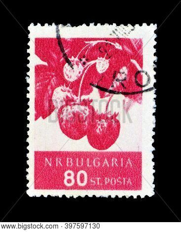 Bulgaria - Circa 1956 : Cancelled Postage Stamp Printed By Bulgaria, That Shows Strawberries, Circa