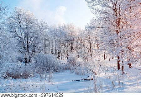 Christmas natural landscape. Winter Christmas landscape, snowy Christmas winter trees in the forest at the sunrise. Winter Christmas tranquil landscape of forest nature covered with white frost and snow