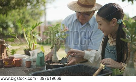 Asian Grandpa With Child Girl Planting Young Tree In The Black Soil And Watering It Together In The