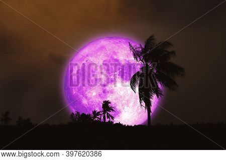 Super Harvest Pink Moon And Silhouette Coconut Tree In The Field And Night Sky