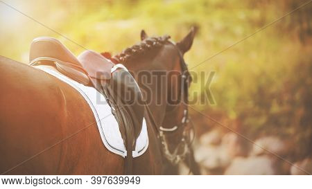 Bright Sun Rays Illuminate A Saddled Bay Racehorse In The Summer. Equestrian Sport. Horseback Riding
