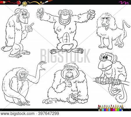 Black And White Cartoon Illustration Of Apes And Monkeys Primate Animal Characters Set Coloring Book