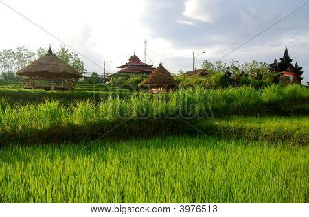 Farming Village, Bali