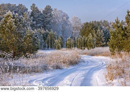 Amazing Winter Landscape With A Snowy Dirt Road In The Forest, Birches, Pines And Grass In Hoarfrost