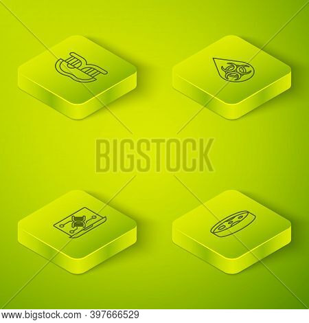 Set Isometric Line Gmo, Genetic Engineering Modification, Petri Dish With Bacteria And Genetically M