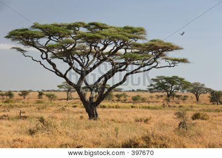 africa landscape , serengeti. poster