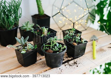 Plants Planted In Black Plastic Pots. Transplanting A Flower With A Set Of Garden Tools In A Black P