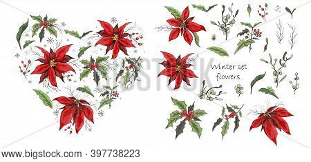 A Set Of Winter Flowers (poinsettia, White Mistletoe, Holly) Isolated On A White Background. Realist