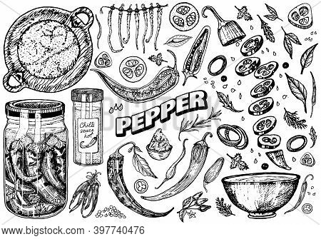 Red Hot Chili Peppers In Vintage Style. Salad Ingredients. Farm Vegetable. Vector Illustration. Hand