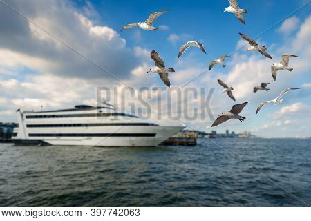 Seagulls Flying Near Cruise Ship In The Hudson River In Hoboken, Nj